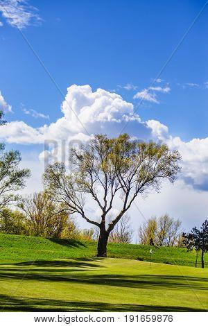 Big tree on the beautiful golf course.