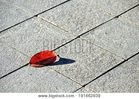 Flagstone pavement with reddened beech leaf lit by morning sunlight