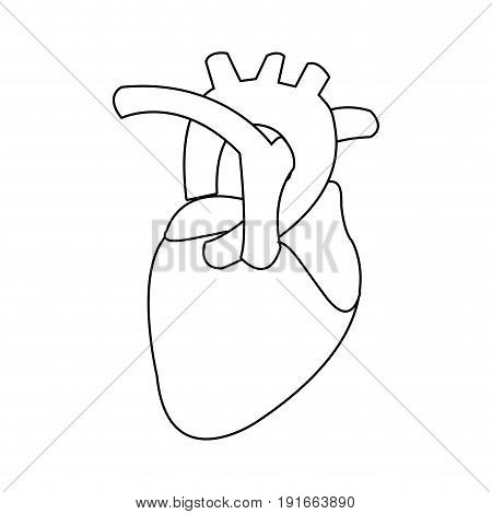 healthy heart organ human cardiology vector illustration