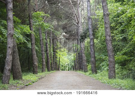 Walking path in the forest. Get lost in the trees