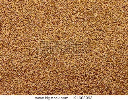 Malted Barley, Grain, Texture, Background, Ingredient, Kernels