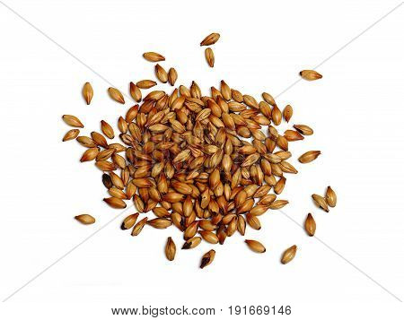 Malted and Roasted Barley on White Background
