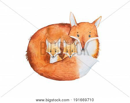Drawing of cute fox family, mother and two fox-cubs.