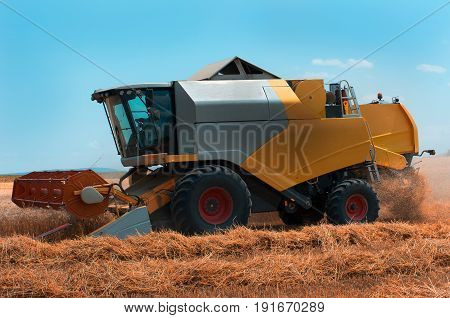 Harvest . Grain harvesting with a combine harvester