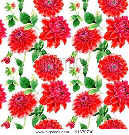 Wildflower dahlia flower pattern in a watercolor style isolated. Full name of the plant: red dahlia. Aquarelle wild flower for background, texture, wrapper pattern, frame or border.