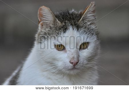 Domestic cat portrait. Cute domestic kitty close-up