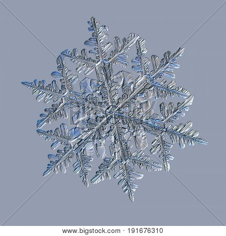 Snowflake isolated on uniform blue background. Macro photo of real snow crystal: large stellar dendrite with fine summetry, glossy relief surface, six long, elegant arms with lots of side branches.