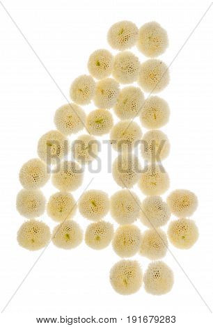 Arabic Numeral 4, Four, From Cream Flowers Of Chrysanthemum, Isolated On White Background