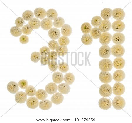 Arabic Numeral 31, Thirty One, From Cream Flowers Of Chrysanthemum, Isolated On White Background