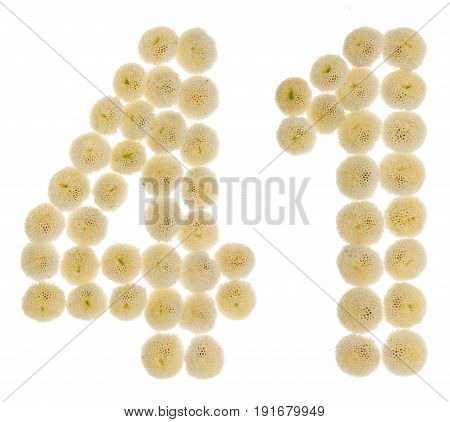 Arabic Numeral 41, Forty One, From Cream Flowers Of Chrysanthemum, Isolated On White Background
