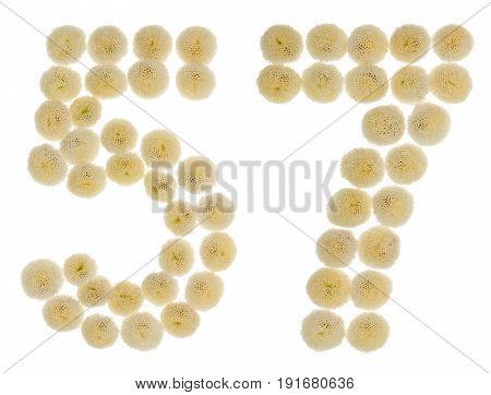 Arabic Numeral 57, Fifty Seven, From Cream Flowers Of Chrysanthemum, Isolated On White Background