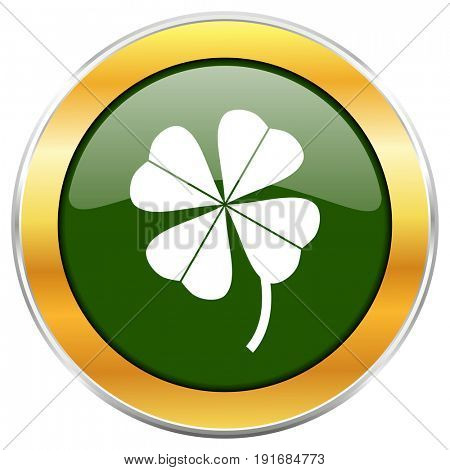 Four-leaf clover green glossy round icon with golden chrome metallic border isolated on white background for web and mobile apps designers.