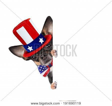 Cute chihuahua dog is uncle sam for 4th of july day