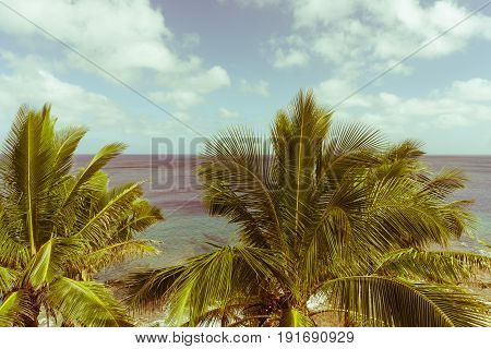 Old photo effect discoloredfaded scene of tropical fronds swaying in breeze over ocean distant horizon and below sky.