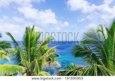 Turquoise ocean through tropical palm trees and fronds swaying in breeze over ocean distant horizon and below sky.