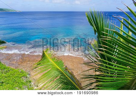 Coastal tropical scene coral reef in turquoise water below palm trees and fronds swaying in breeze over ocean distant horizon.