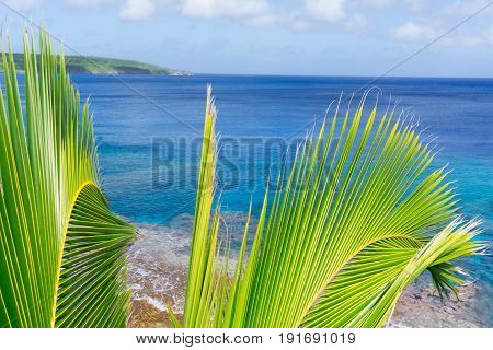 Bright green and yellow coconut palm fronds in tropical scene over ocean distant horizon and below sky.