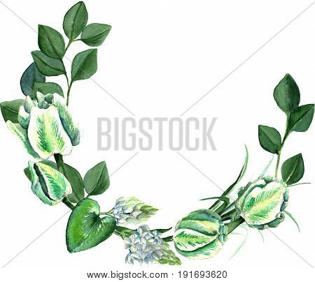 Watercolor hand drawn white and green parrot tulips, freesia, eucalyptus, ornithogalum lilly leaves wreath. Decorative floral composition for wedding design. Round frame for your design.