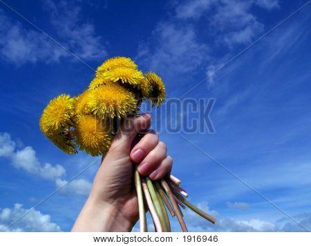 Sunny Reach