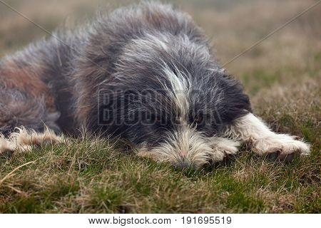A Large Dog In The Grass