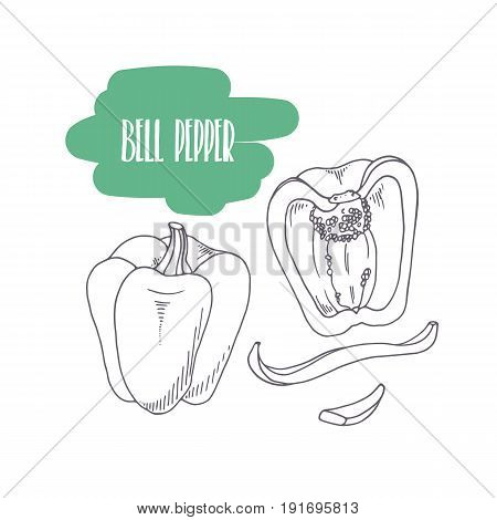 Hand drawn bell pepper isolated on white. Sketch style vegetables with slices for market, kitchen or food package design. Vector illustration