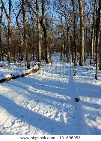 Wooded Skiing Trail in Winter at Lake Maria State Park
