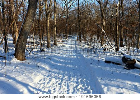 Wooded Skiing Trail in Winter near Monticello, Minnesota