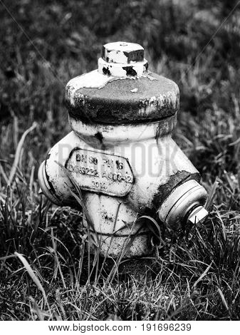 Old fire hydrant hidden in the grass. Black and white image.