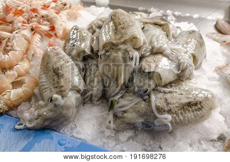 Cuttlefish On Ice At The Fish Market.