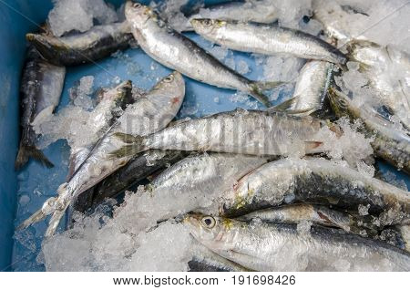 Sardines On Ice At The Fish Market