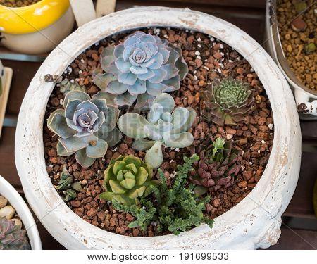 succulent plant with flower pot in garden