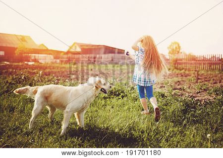 Little girl with a child with a labrador puppy in the street in summer in the rays of the setting sun running on the grass. The concept holiday