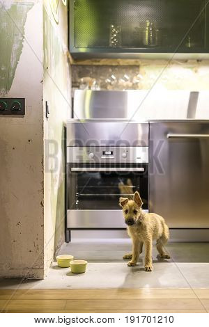 Funny puppy stands on the floor near his green dog bowls in the luminous kitchen in a loft style with shabby walls. There is an oven, chrome locker, reticulated dark shelf. Vertical.