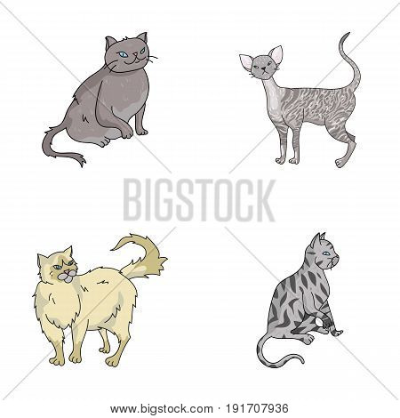 Persian, Cornish rex and other species. Cat breeds set collection icons in cartoon style vector symbol stock illustration .