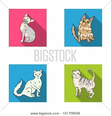 Turkish Angora, British longhair and other species. Cat breeds set collection icons in flat style vector symbol stock illustration .