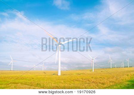 Windmills in a field in soft light. Big island. Hawaii. USA