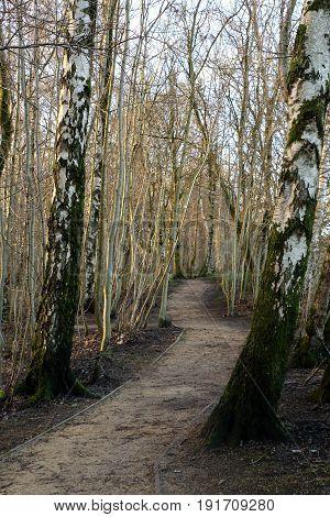 Forested Hiking Trail along Loch Lomond in Balloch, Scottland