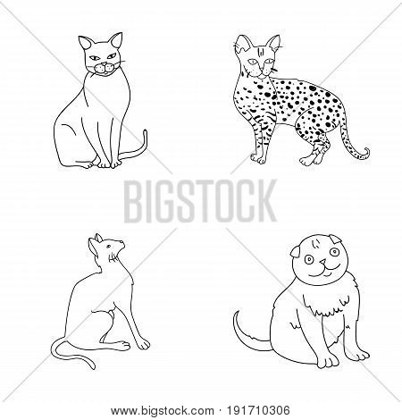 Siamese and other species. Cat breeds set collection icons in outline style vector symbol stock illustration .