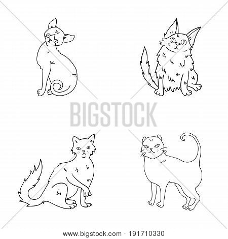 Turkish Angora, British longhair and other species. Cat breeds set collection icons in outline style vector symbol stock illustration .