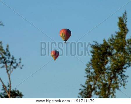Hot Air Balloons through De-focused Tree Limbs near Phoenix, Arizona