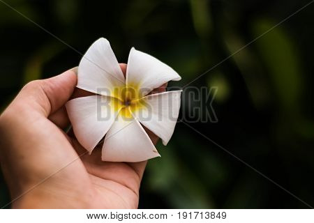 Flower on the hand close up, Beautiful in nature.