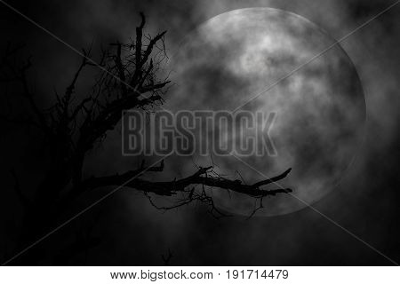 Tree and moon in the night scary background Concept halloween.
