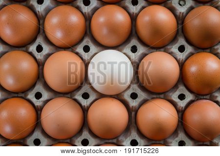 Duck egg are different from chicken eggs.