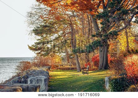 Beautiful autumn fall forest surreal colors of fantasy landscape with trees branches and red yellow leaves on the ground park with one lonely old bench on bank shore near water