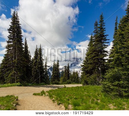 Hiking path among pine trees with cloudy blue skies