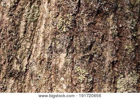 Rough brown tree bark in the sunshine
