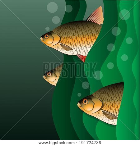 Redfins flock. Fish look out of algae. Under the water. Vector illustration.