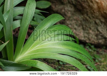 Green of ornamental plants on the ground.