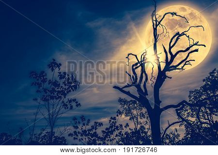 Night Landscape Of Sky With Bright Super Moon Behind Silhouette Of Dead Tree. Vintage Tone.