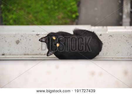 Young Black Cat Escaped From The Room And Sitting Outside At The Window Sill Of An Apartment House A